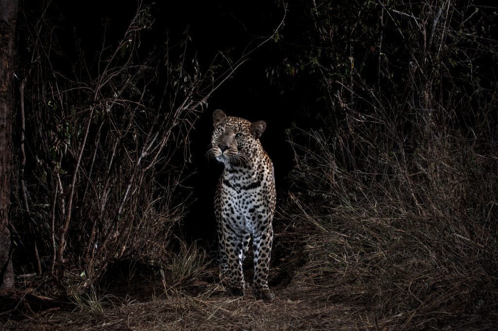 """Will Burrard-Lucas: """"I didn't realise animals like this ..."""