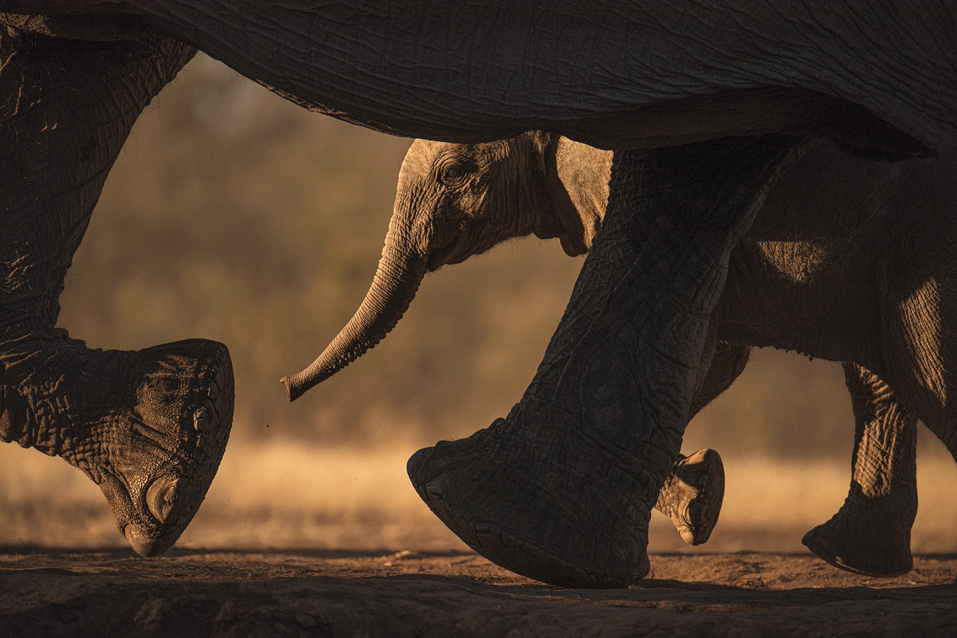 Pack Your Trunks: 18 astonishingly beautiful elephant photos